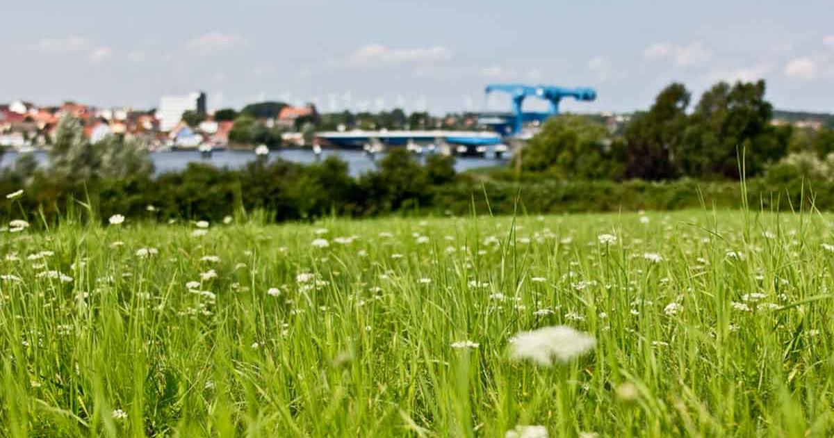 Wolgast Blaues Wunder Brücke Blumen im Vordergrund