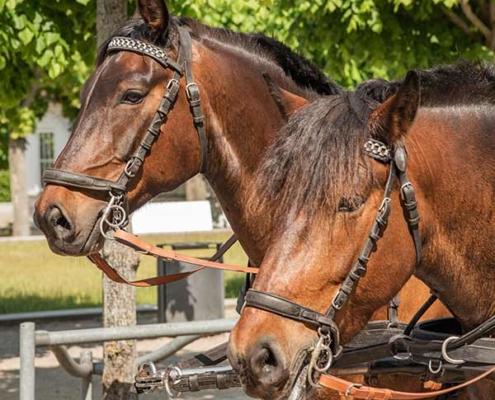 Pferde Hochzeitskutsche Insel Usedom