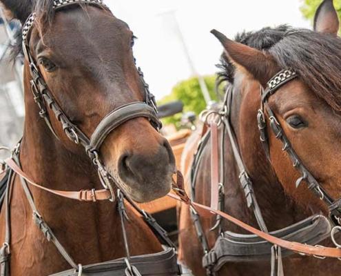Pferde Hochzeit Kutsche Usedom